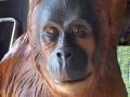 orang outan animaux en résine classique  006