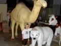 Dromadaire chameau animaux en résine classique  011