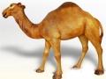 Dromadaire chameau animaux en résine classique  014