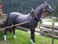 cheval en résine classique 003