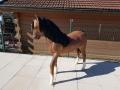 cheval en résine classique 006
