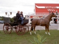 cheval en résine classique 012