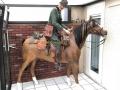 cheval en résine classique 0129