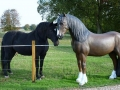 cheval en résine classique 020