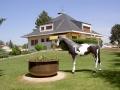 cheval en résine classique 024