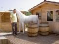 cheval en résine classique 025