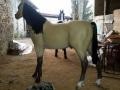cheval en résine design 007