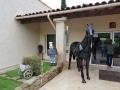 cheval en résine design 019
