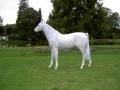 cheval en résine design 034