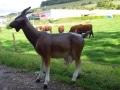 chèvre en résine classique 006