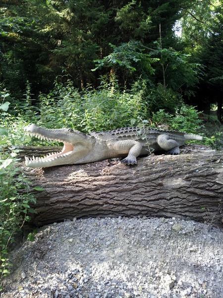 Crocodile animaux en résine classique  018