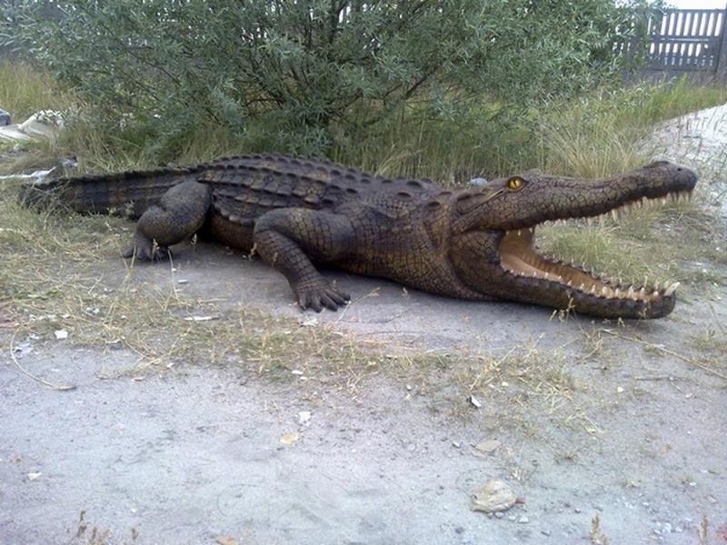 Crocodile animaux en résine classique  042