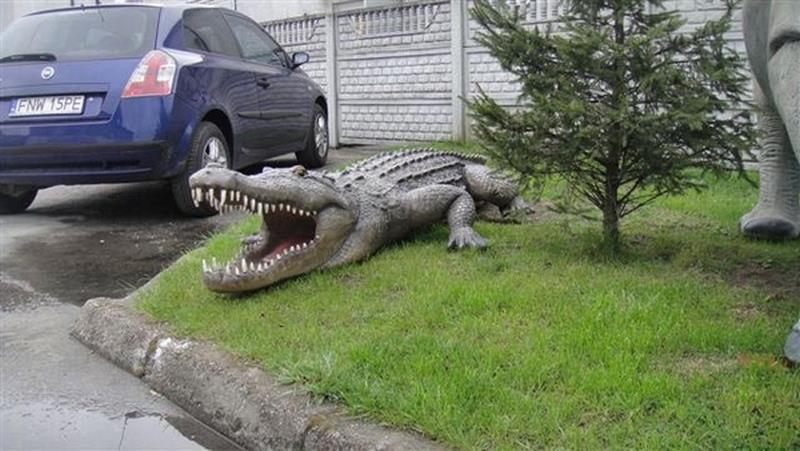 Crocodile animaux en résine classique  052