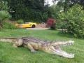 Crocodile animaux en résine classique  021