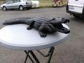 Crocodile animaux en résine classique  044