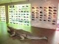 Crocodile animaux en résine classique  047