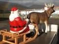 Noël animaux  et objets en résine location event 012