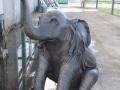 Eléphant animaux en résine classique  104