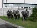 Eléphant animaux en résine classique  058