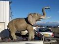 Eléphant animaux en résine classique  066