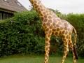 Girafe animaux en résine classique  127
