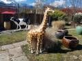 girafon-en-resine-classiqsue-D20-008