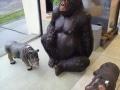 Gorille animaux en résine classique 136