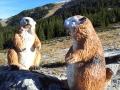 marmottes en résine classique 013