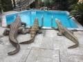 crocodile en résine 027