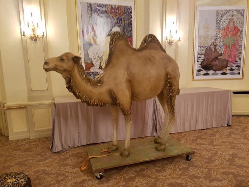 chameau classique   033