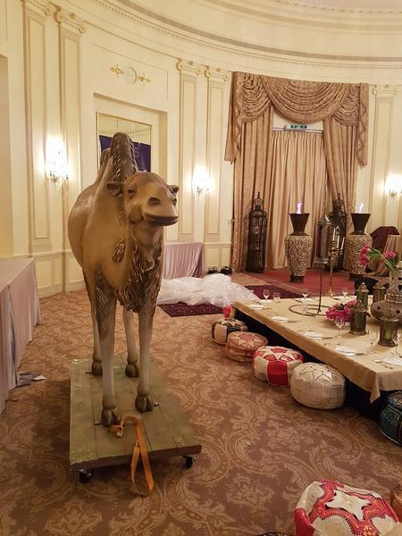chameau  classique   035