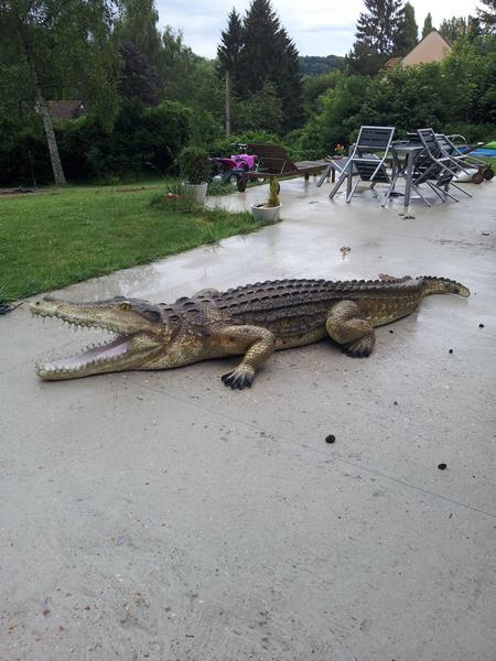 crocodile en résine classique 002