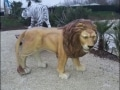 lion en resine classique 003