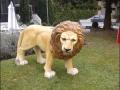 lion en resine classique 004