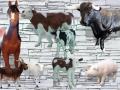 location animaux en résine  034