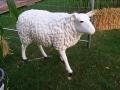 mouton  en résine classique     002
