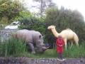 rhinocéros animaux en résine classique  146