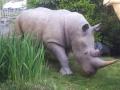 rhinocéros animaux en résine classique  154