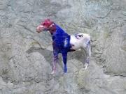 cheval   en resine style visage