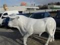taureau boeuf en résine classique 002