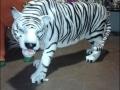 tigre en résine classique 001
