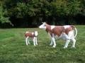 Vache-classique-race-monbeliarde-D20-021