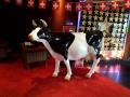 vache  en résine classique   012