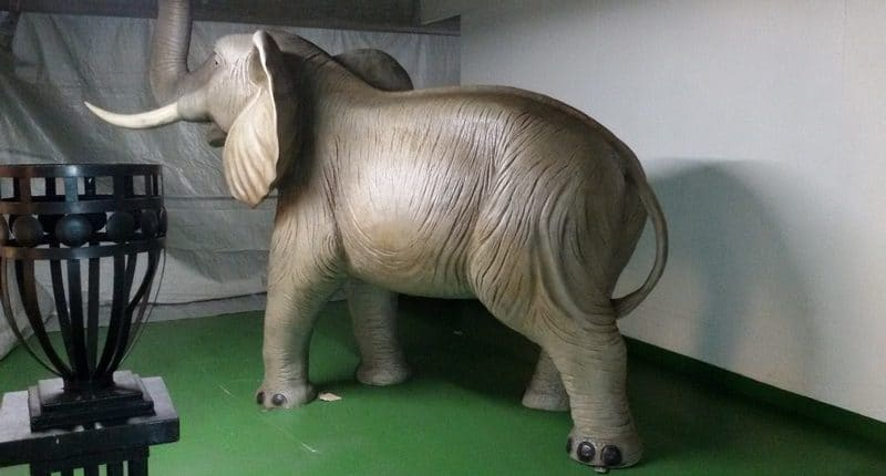 Location éléphant