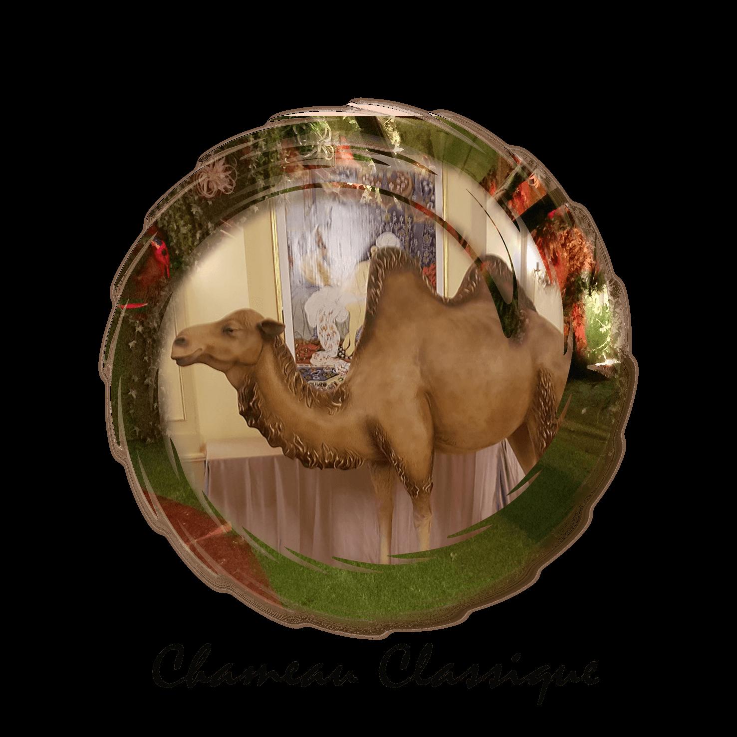 chameau classique et dromadaire