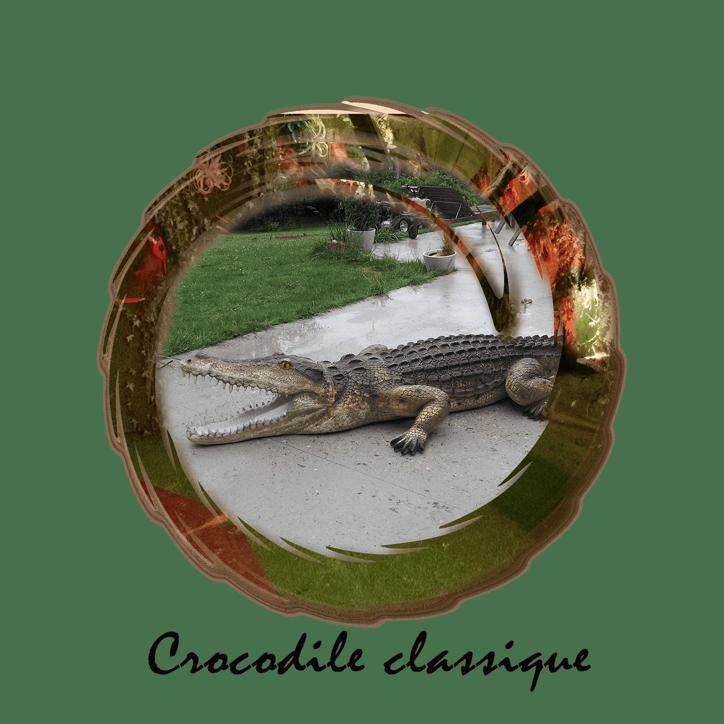 crocodile classique